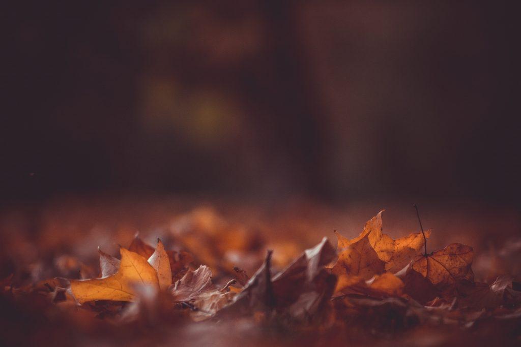 Herfst / www.eenlepeltjelekkers.be